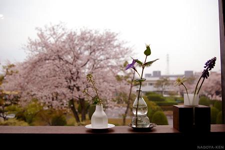目の前は、桜の綺麗な公園