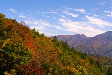 白山スーパー林道の紅葉