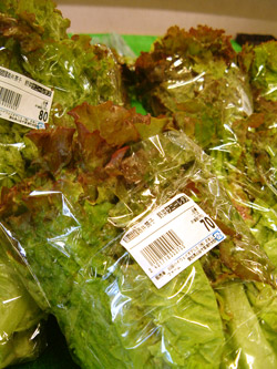 おあしすファームの野菜