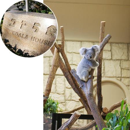 東山動物園のコアラ(今起きたところです)