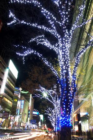 大津通の街路樹
