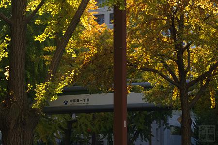 桜通のイチョウ並木