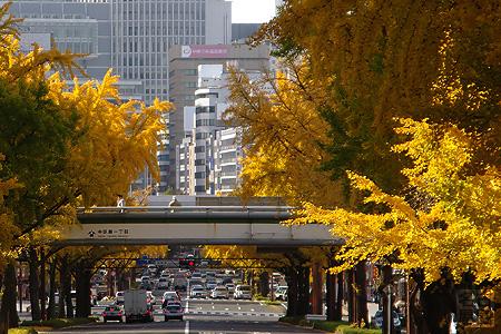 桜通のイチョウ並木(日銀前歩道橋から)