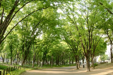昼下がりの白川公園