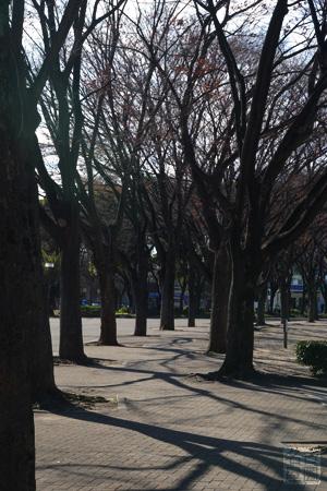 冬の白川公園