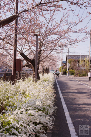 桜咲く山崎川