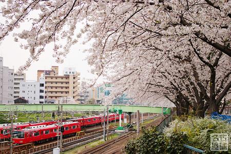 金山新橋からみる名鉄電車と桜