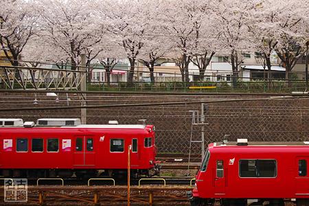 桜の下を走る名鉄電車