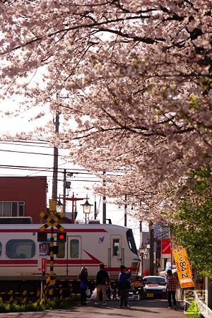名鉄1800系と桜