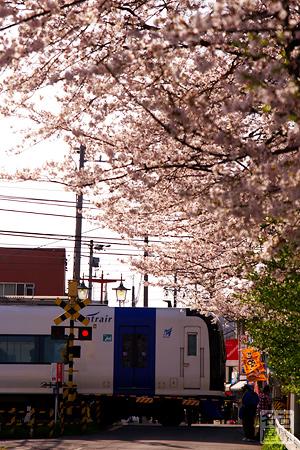 名鉄2000系と桜