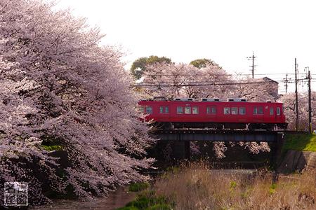 名鉄犬山線と桜