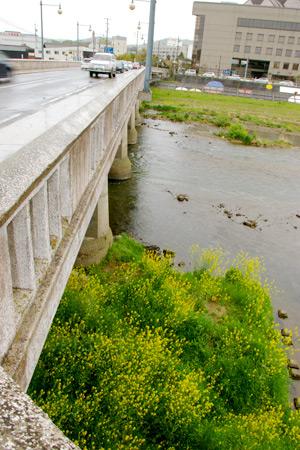 多治見橋から土岐川を眺める